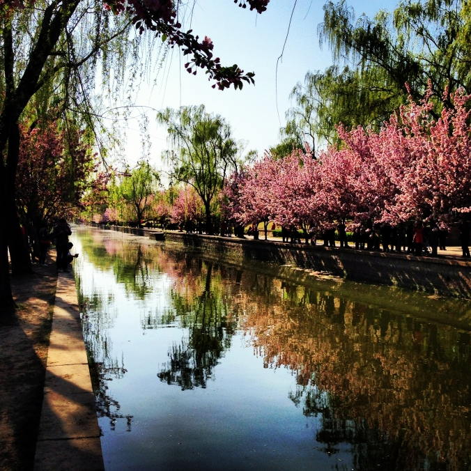 Trees in bloom at the Yuan Dynasty City Wall park.