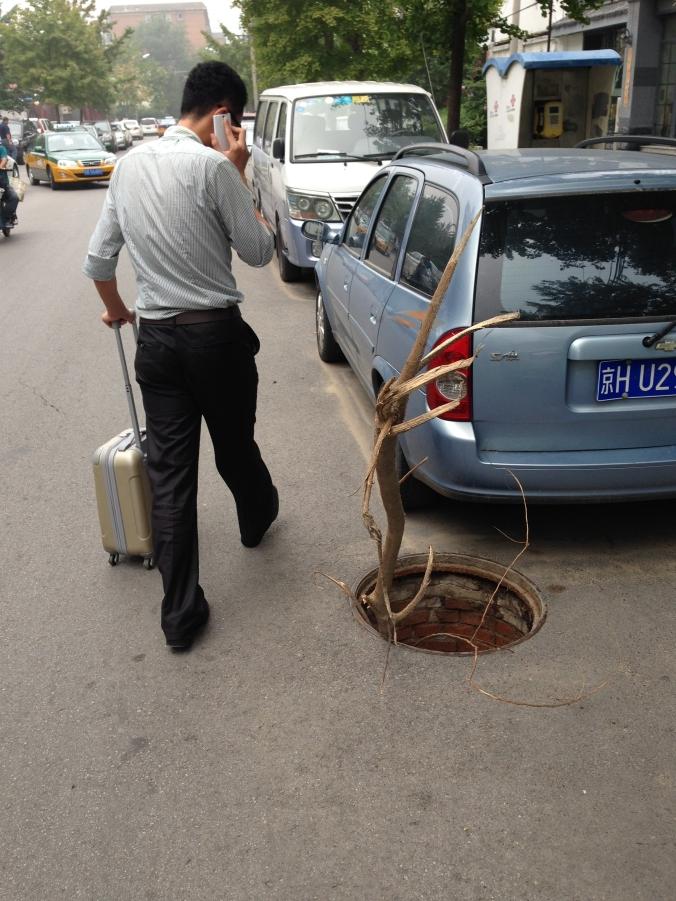 manhole.tree
